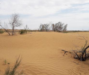The Kyzylkum Desert