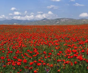 Flora di Uzbekistan