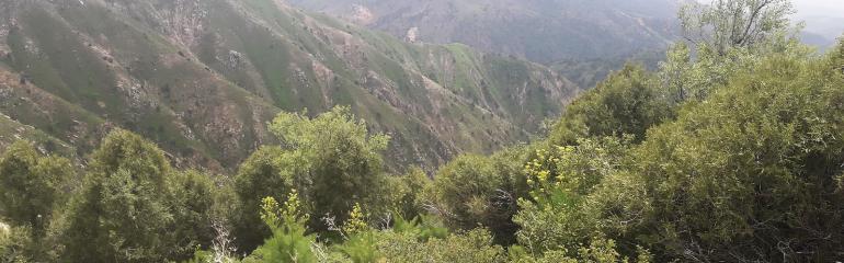 Восхождение на вершину Большого Чимгана